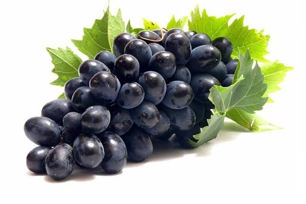 انواع انگور