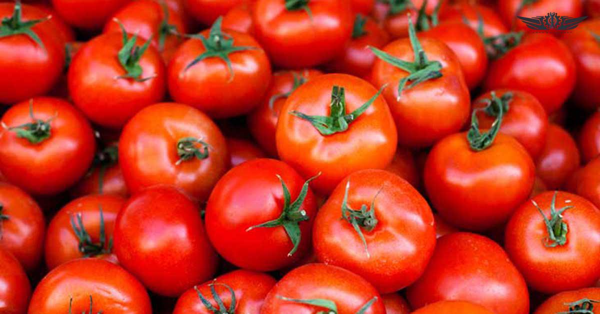 فروش دستگاه آبگیر گوجه
